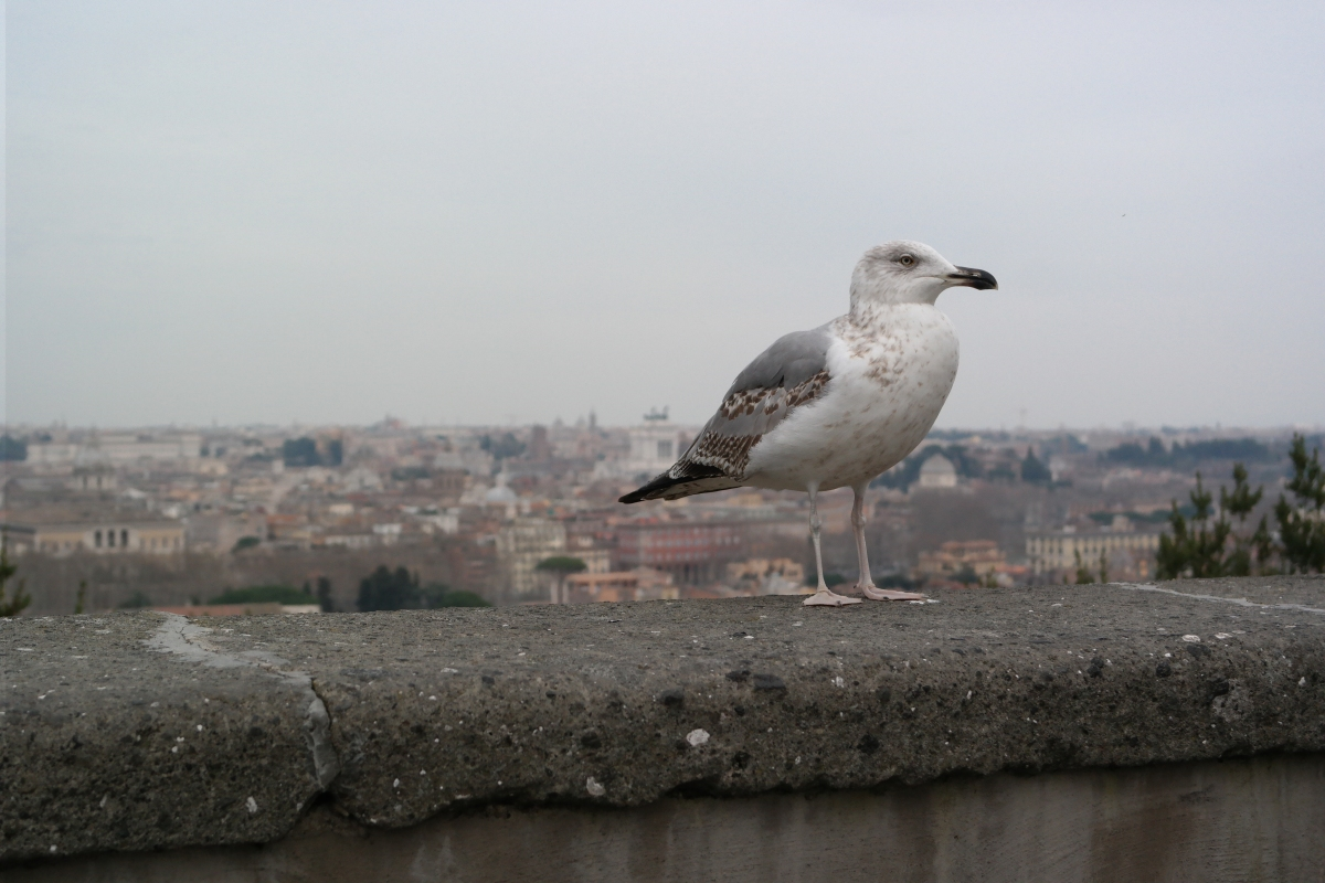 ¡Mi viaje a Roma!