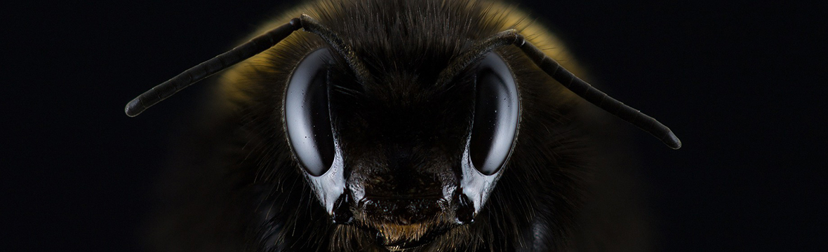 Tu la miel